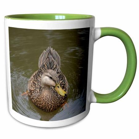 Duck Knob Facing (3dRose Female Mallard Duck Facing Front - Two Tone Green Mug, 11-ounce)