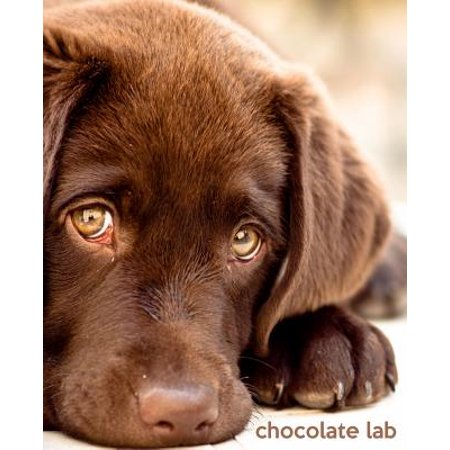 Chocolate Lab : A Gift Journal for People Who Love Dogs: Chocolate Labrador Retriever Edition