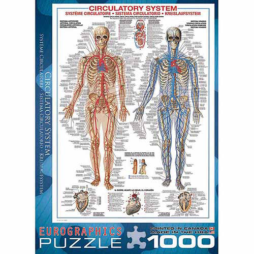 EuroGraphics Circulatory System 1000-Piece Puzzle