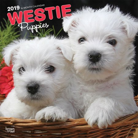 Yorkshire Terrier Calendar (2019 West Highland Terrier Puppies Wall Calendar, by BrownTrout)