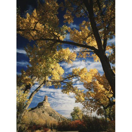 Cottonwoods and Squawbush, Gunnison Butte at Green River Flood Plain, Utah, USA Print Wall Art By Scott T. Smith