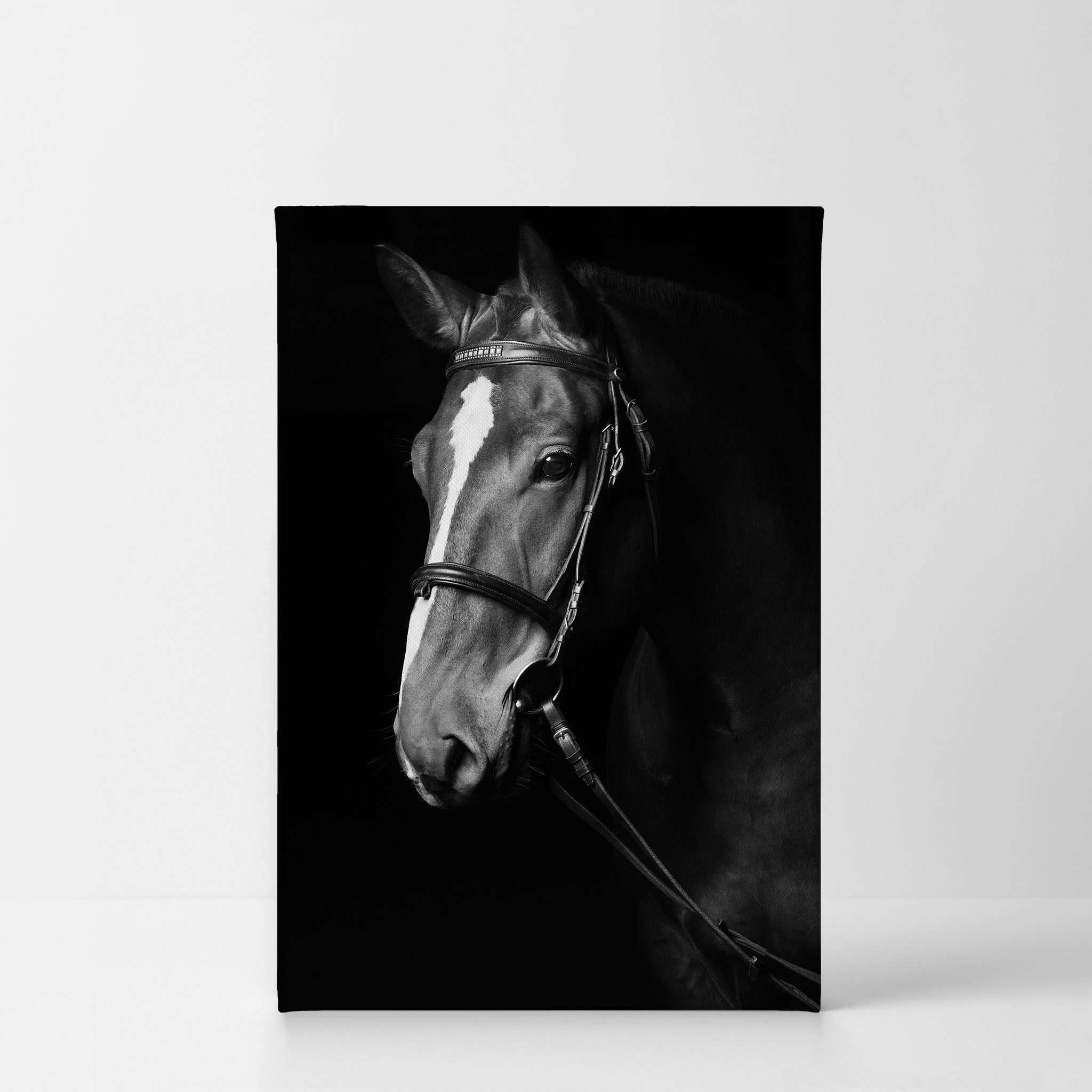 BEAUTIFUL BLACK HORSE PHOTO PICTURE PRINT ON FRAMED CANVAS WALL ART DECOR