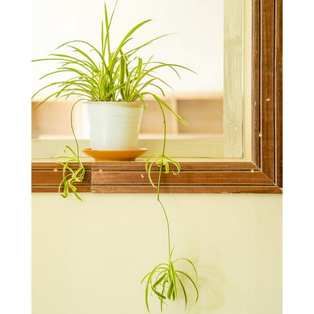 LAMINATED POSTER Beautiful Tenacious Proud Green Life Bonsai Poster Print 24 x 36