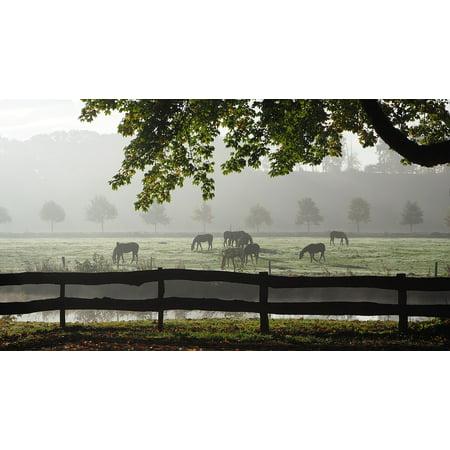 Canvas Print Fog Autumn Morning Autumn Back Light Mood Sunlight Stretched Canvas 10 x