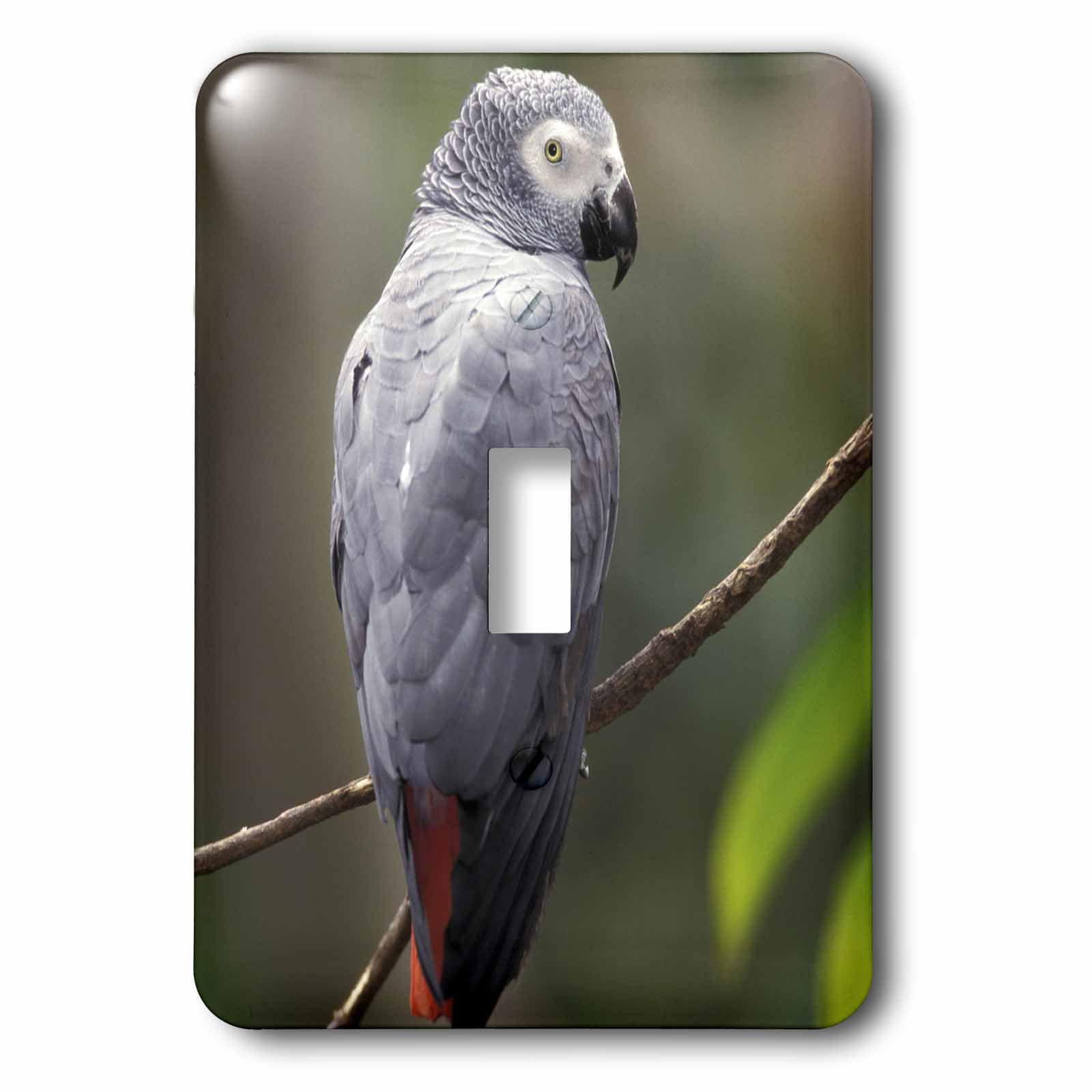 3dRose African Gray Parrot, Tropical Bird - NA02 AJE0248 - Adam Jones, 2 Plug Outlet Cover