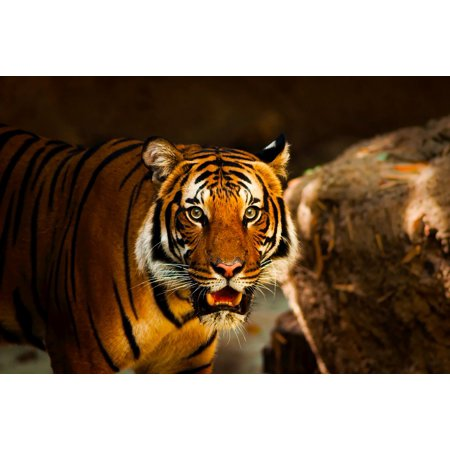 LAMINATED POSTER Wildlife Macro Tiger Predator Animal Closeup Poster Print 24 x 36](Animal Posters)