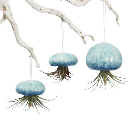 Hanging Air Plant Planters  - Set of 3 Ceramic Sea Urchins ()