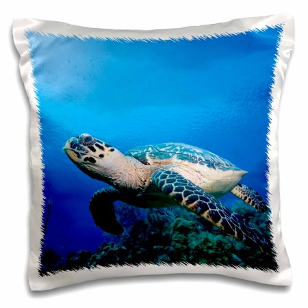 3dRose Cayman Islands, Hawksbill Sea Turtle and coral reef -CA42 PSO0093 - Paul Souders - Pillow Case, 16 by 16-inch