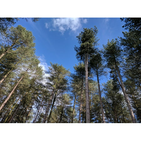 LAMINATED POSTER Blue Trees Nature Forest Summer Sky Landscape Poster Print 24 x 36