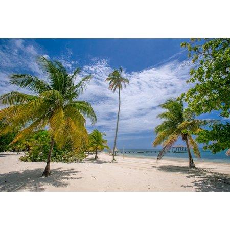 LAMINATED POSTER Palm Trees Caribbean Beach Palmetto Bay Sea Coast Poster Print 24 x 36