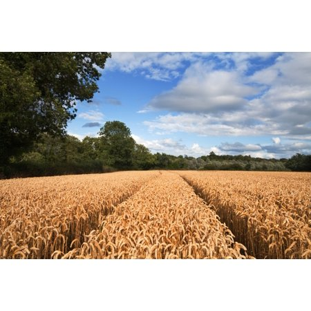 Cornfield On The Banks Of The Blackwater River County Waterford Ireland Canvas Art   Panoramic Images  36 X 12