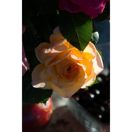 Peel n stick poster of beautiful flower rose yellow summer for Rose adesive