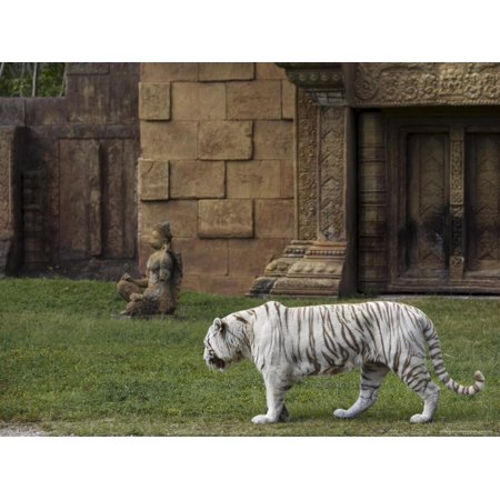White Bengal Tiger at Miami Metro Zoo, Miami, Florida, USA Print Wall Art By Angelo Cavalli](Metro Zoo Halloween)