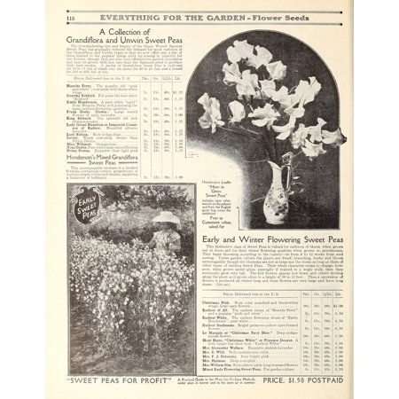 LAMINATED POSTER 118 EVERYTHING FOIR THE QA3RDEH åÇåÊFlower A Collection of Grandiflora and Unvvin Sweet Peas The ove Poster Print 24 x 36