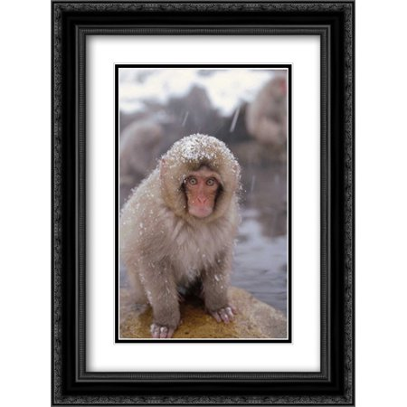 Japanese Macaque in hot springs, Japanese Alps, Nagano, Japan 2x Matted 18x24 Black Ornate Framed Art Print by Wothe, Konrad