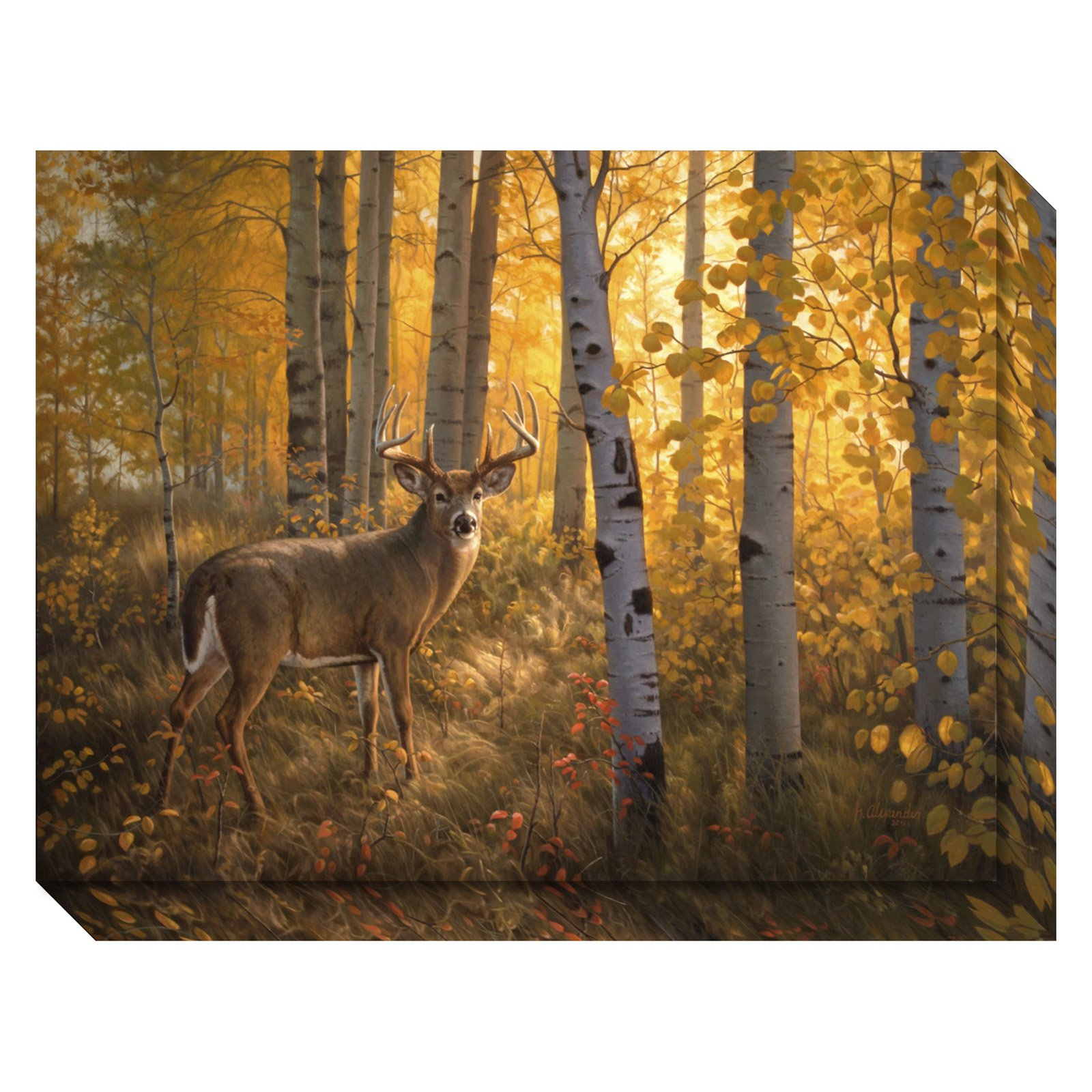 Amanti Art Canvas Gallery Wrap Whitetail in Aspens by Greg Alexander by Amanti Art