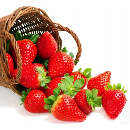 - Everbearing Strawberry 25 Bare Root Plants - Fruit Spring, Summer & Fall