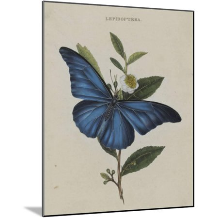 Album Donovan : an epitome of the natural history of insects in China Wood Mounted Print Wall Art By Edward Donovan