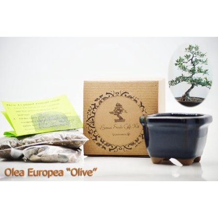 9GreenBox - Olea Europea