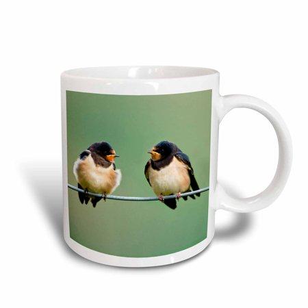 3dRose Barn Swallow birds on a branch - EU43 DSL0004 - David Slater, Ceramic Mug, (Best Way To Get Rid Of Barn Swallows)
