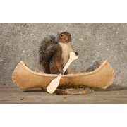 Canoeing Rowing Squirrel Taxidermy Animal Statue on Base Home or Office Gift by American Natural Resources