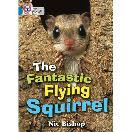 The Fantastic Flying Squirrel - Medium Flying Squirrel