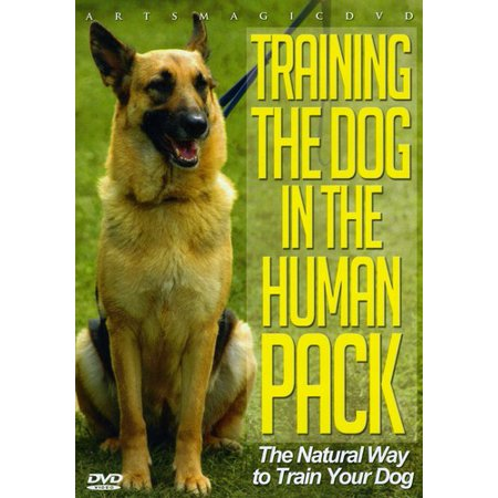 Training the Dog in the Human Pack (DVD)