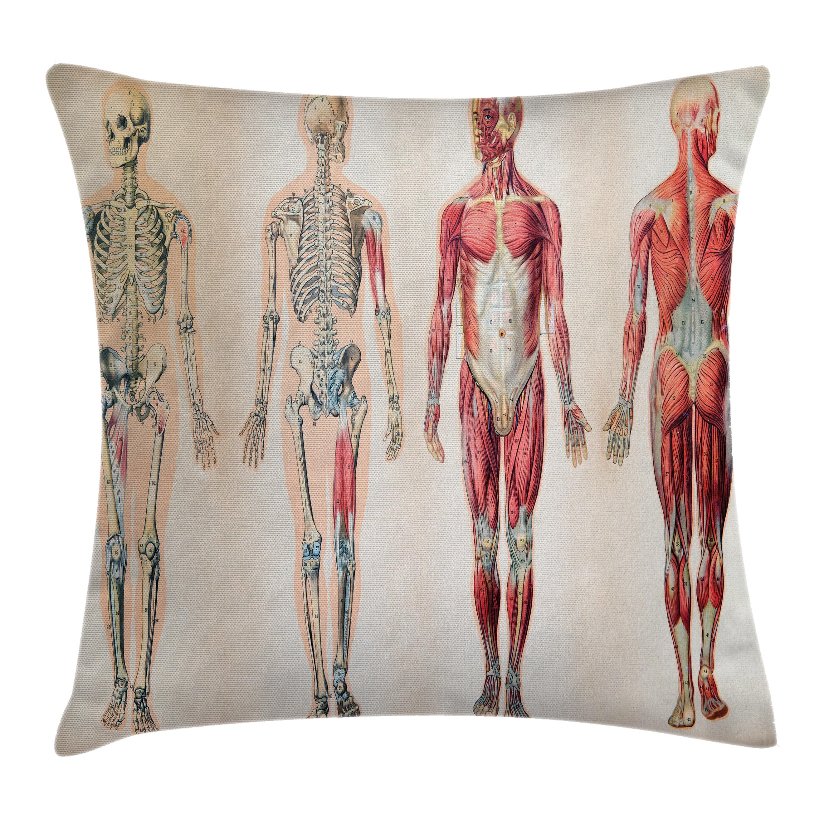 Human Anatomy Throw Pillow Cushion Cover, Vintage Chart of Body ...