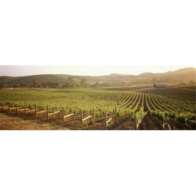 Panoramic Images PPI90657L Panoramic view of vineyards  Carneros District  Napa Valley  California  USA Poster Print by Panoramic Images - 36 x 12 - image 1 of 1