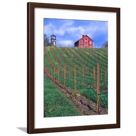 Red Barn Above Vineyard, Dry Creek Valley, California, USA Framed Print Wall Art By John Alves