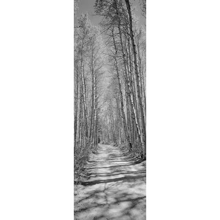 Trees Along A Road Log Cabin Gold Mine Eastern Sierra Californian Sierra Nevada California Usa Poster Print