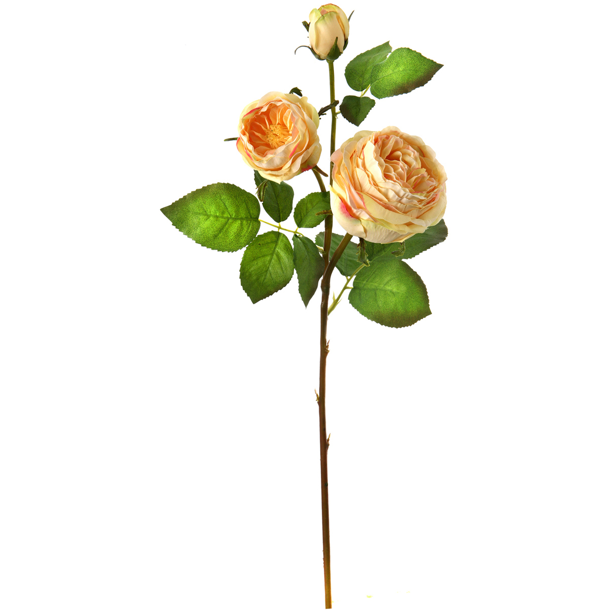 "English Rose X2 + Bud 28""-Yellow"