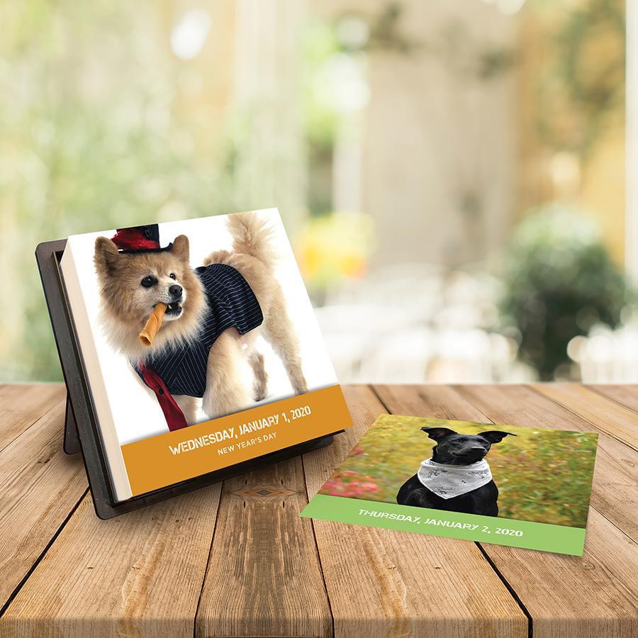 2020 Dogstagram Daily Desktop Calendar by TF Publishing