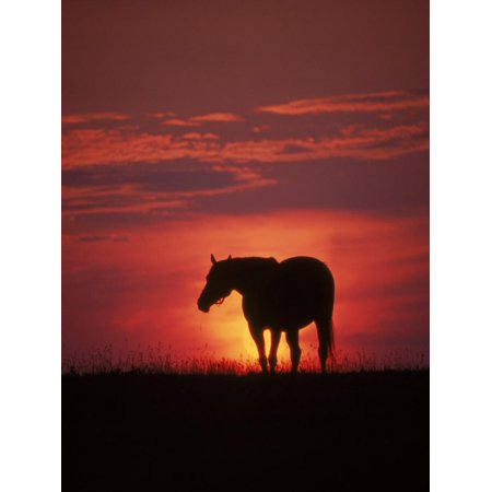 Silhouette of Horse at Sunset, Lexington, KY Print Wall Art By Brian Maslyar - Halloween Store Lexington Ky