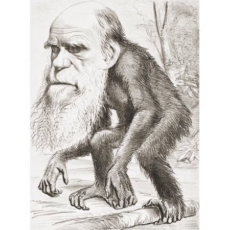 Charles Darwin 1809 - 1882 English Naturalist Here Portrayed As An Ape In A Cartoon In The Hornet Magazine Of 22 March 1871 The Caption Read A Venerable Orang-Outang - -