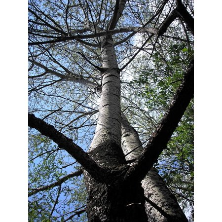 Laminated Poster Natural Tree Landscape Forest Nature Spring Green Poster Print 24 x 36