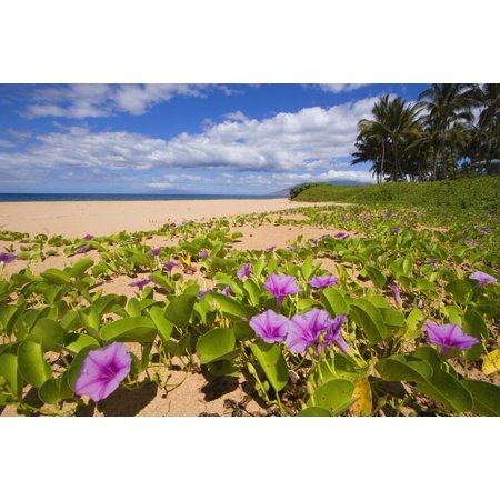 Hawaii maui kihei keawakapu beach green leafy vines with pink hawaii maui kihei keawakapu beach green leafy vines with pink flowers on shore canvas art mightylinksfo