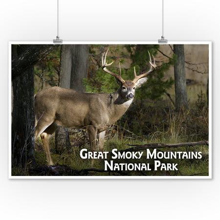 Great Smoky Mountains - White Tail Deer Buck - Lantern Press Photography (James T. Jones) (9x12 Art Print, Wall Decor Travel Poster)