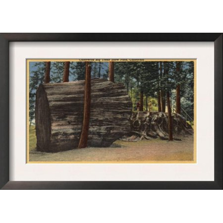 Santa Cruz County, CA - Calaveras Big Trees State Park Framed Art Print Wall Art