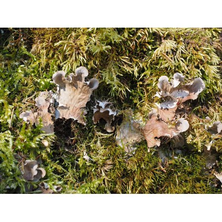 Canvas Print Mushrooms Moss Curled Crater Elle Stretched Canvas 10 x