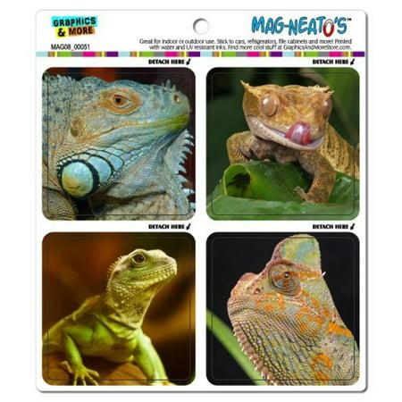 Graphics and More Cute Lizards Iguana Gecko Chameleon Asian Water Dragon Reptile Mag-Neato's Car Refrigerator Locker Vinyl Magnet - Cute Geckos