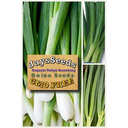 Tokyo Long White Bunching Onion Scallions 200 Seeds (Organic) Cl Norwell Onion Post Light