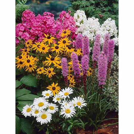 Bloomsz four great sun garden perennial collection flower bulb bloomsz four great sun garden perennial collection flower bulb roots flower bulbs 4pk mightylinksfo