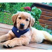 Furhaven Pet NAP Mesh Dog Harness