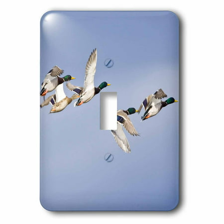 3dRose Mallard ducks in flight, Whitefish Montana - US27 CHA1330 - Chuck Haney, 2 Plug Outlet Cover