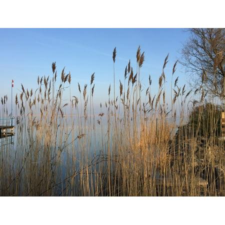 LAMINATED POSTER Reed Idyll Beautiful Lake Nature Landscape Bank Poster Print 24 x