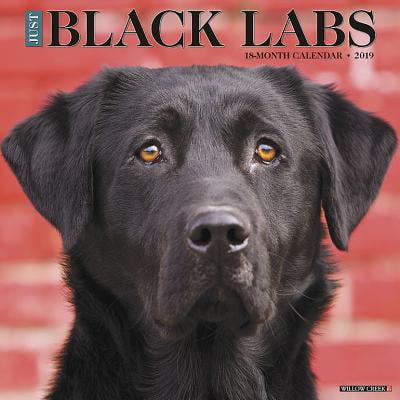 Just Black Labs 2019 Wall Calendar (Dog Breed Calendar) (Other)