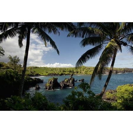 Hawaii Maui A sunny view of Waianapanapa from behind palm trees (Maui Jim Nine Palms)