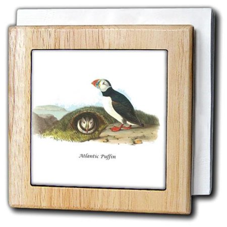 atlantic puffin james audubon