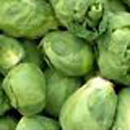 Brussels Sprout (Brussel Sprouts Long Island Improved Great Heirloom Vegetable 2,000 Seeds)